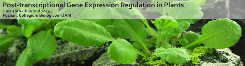 Potranskrypcyjna regulacja ekspresji genów u roślin